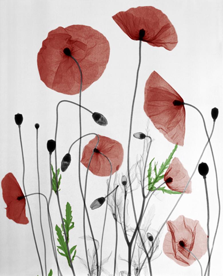 Raio X da natureza flores