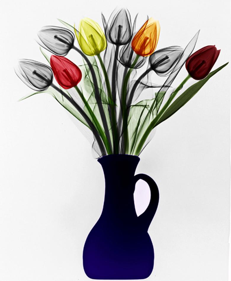 raio-x-da-natureza-tulipas
